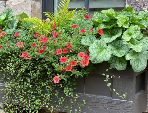 Price Window Boxes